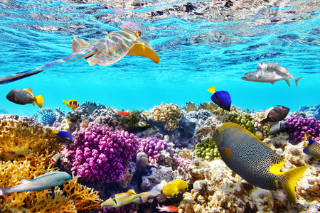 tropical reef Philippines